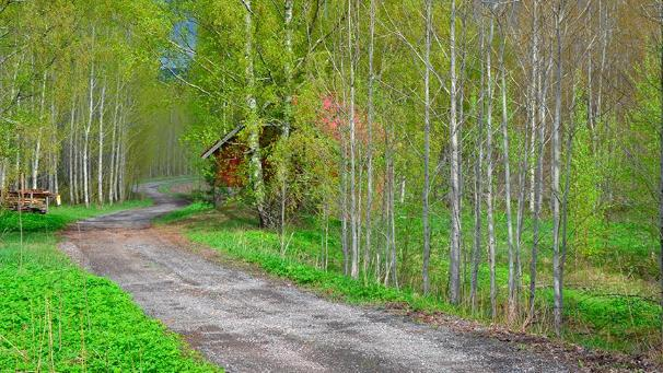 Photo: a private road and a house (LVM)